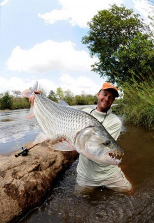 Goliath Tigerfish - Hardest Fighting Fish