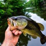 Fishing Boat - Saltwater fish - One fish
