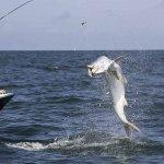 Tarpons Spot - Live bait & Artificial bait