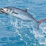 Kingfish in Miami - Deep Sea Fishing