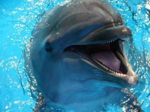 Why iOutdoors Swim with Dolphins