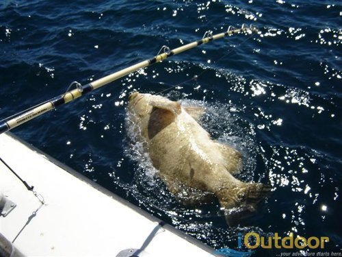 grouper fishing in florida