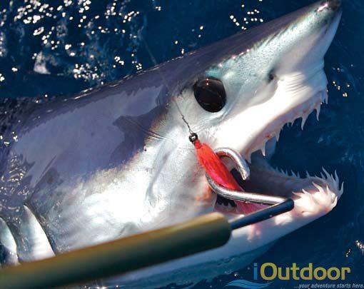 Shark Fishing in Florida - iOutdoor Fishing Adventures