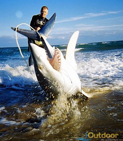 Shark Fishing in Florida