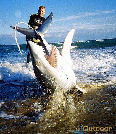 Hammerhead Sharks Vulnerable