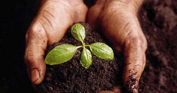 Obtenez un sachet de semences gratuit