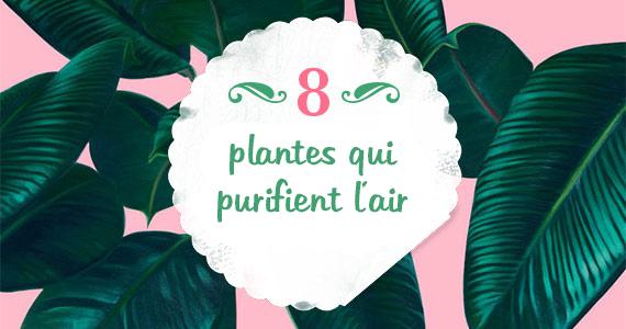 8 meilleures plantes de maison pour purifier l'air