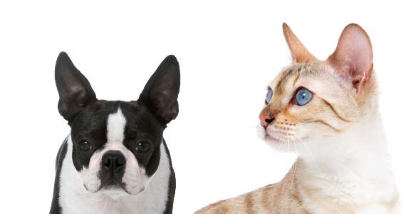 Inscrivez-vous à Pet First de Royal Canin