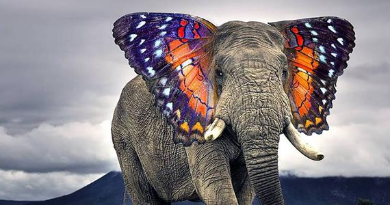 Nouvelles races d'animaux créé à l'aide de Photoshop
