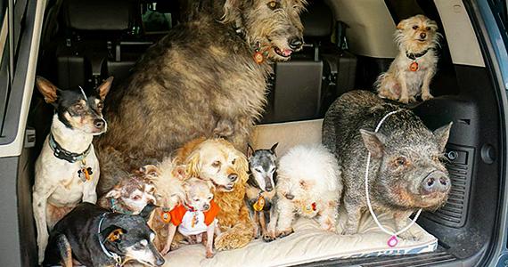 Il adopte des animaux abandonnés pour leur plus grand bonheur et le sien