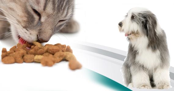 Échantillon de nourriture pour animaux gratuite