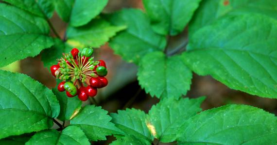 5 incroyables plantes à ajouter à votre alimentation