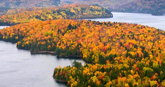 Une carte pour suivre les couleurs de l'automne
