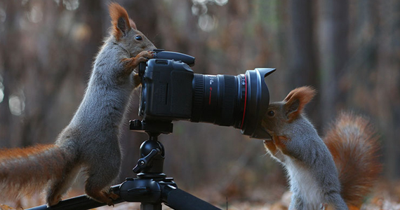 Ce photographe a un talent fou pour les photos de nature