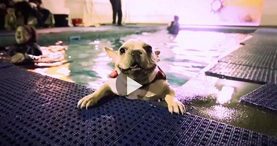 Des chiens à leur première leçon de natation