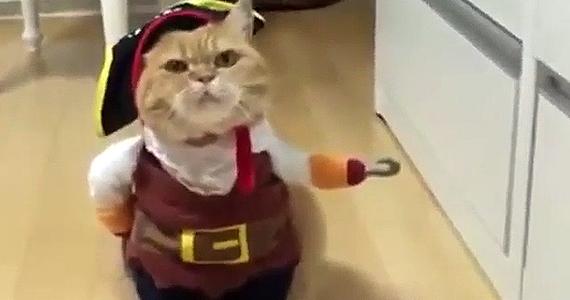 Le meilleur costume pour chat!