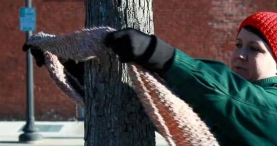 Pourquoi les gens attachent-ils des foulards aux arbres cet hiver?