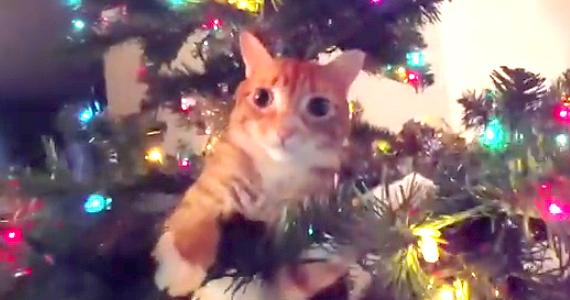 Il monte un arbre de Noël juste pour faire plaisir à son qui combat un cancer