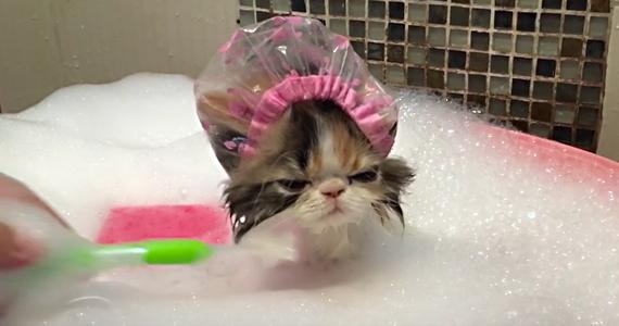 Cet adorable chaton souffre en silence !