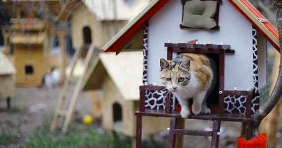 Des bénévoles ont construit un village pour les chats errants en Turquie