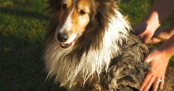 Ce traitement antimoufette pour chien fonctionne ultra rapidement