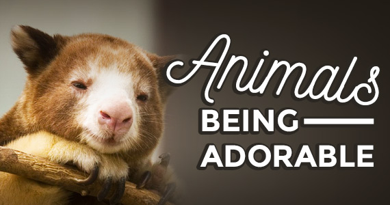 10 Animals Doing What They Do: Being Adorable