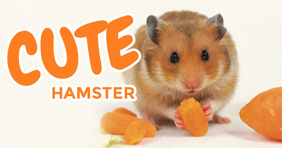 The Most Adorable Hamster Eating a Carrot