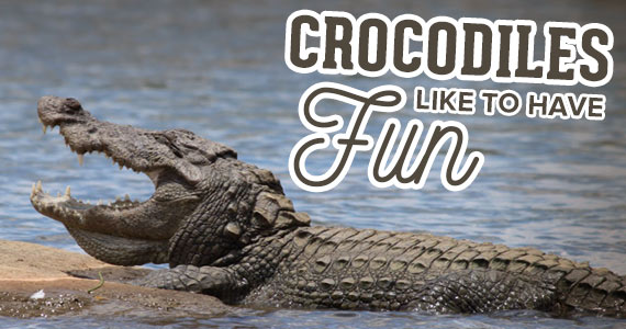 This Video Proves that Crocodiles Like to Have Fun Too