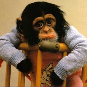MonkeySad Avatar.jpg