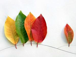 resized_leafs-1024x768.jpg