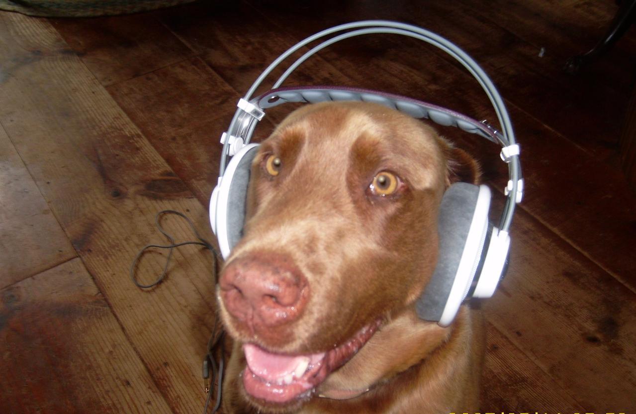 headphone alt.jpg