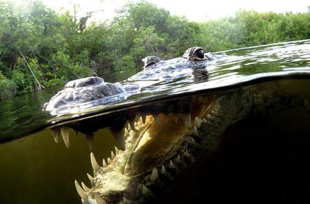 Mayan Community and Crocodile-Watching Combo Tour with Snorkeling