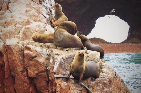 Ballestas Islands and Paracas National Park Day Trip