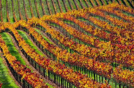Small Group Sonoma Redwoods and Wine Tour
