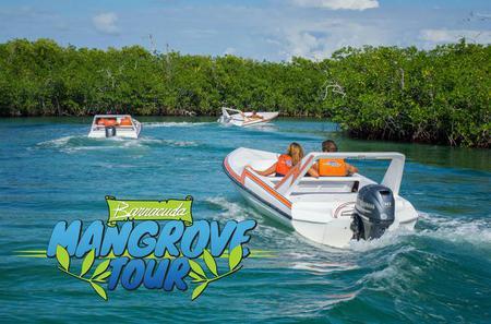 Mangrove Speed Boat Tour