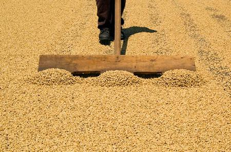 Doka Coffee Plantation, Grecia and Sarchi Oxcart Factory Tour from San Jose