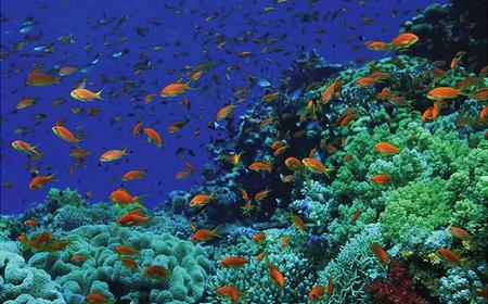 Hurghada Full-Day Snorkel Tour of Giftun Islands
