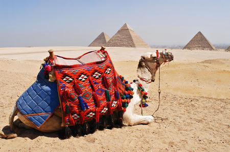 Private-Day tour to Giza Pyramids, Alabaster Mosque and Hanging Church From Cairo