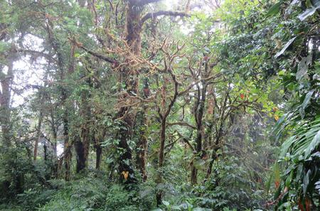 Monteverde Cloud Forest Hike from Monteverde