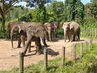 Lok Kawi Wildlife Park - Private Tour