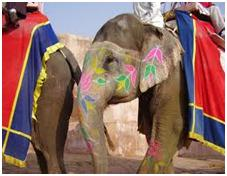 Amer Fort Elephant Ride 3-Hour Tour