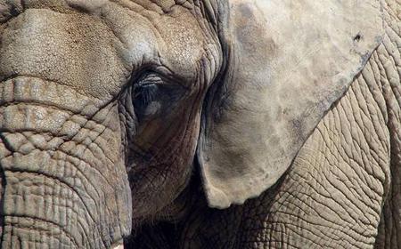 Elephant Sanctuary Tour from Johannesburg & Pretoria