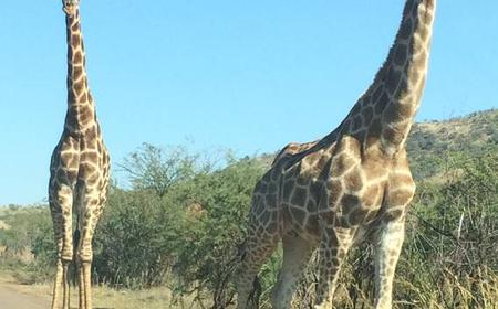 Pilanesberg National Park Full-Day Safari