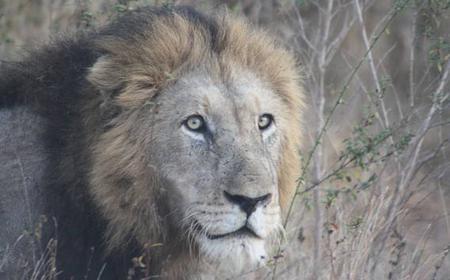 Exclusive One Day Pilanesberg Safari