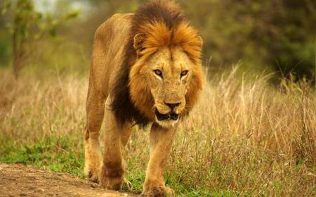 Kruger Park Uncovered (2 nights/ 3 days)