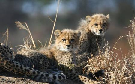 Kruger Park Uncovered 4-Day Game Safari