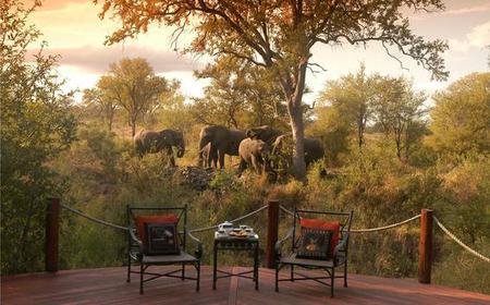 Classic Kruger Park Safari