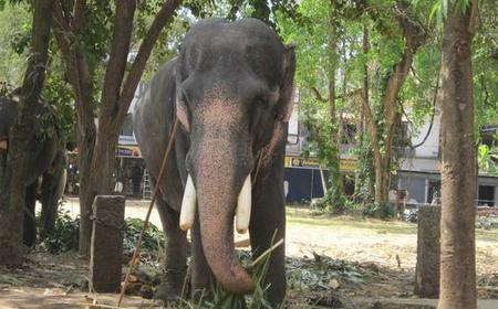 Guruvayoor Temple and Elephant Sanctuary Tour from Kochi