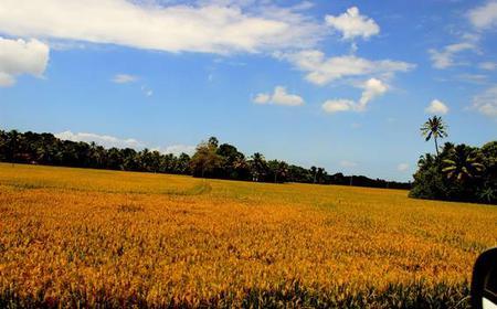 Fort Kochi: Backwaters of Kerala Full-Day Tour