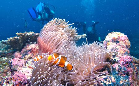 Borneo Full Day Try Dive (2 Dives) for Beginners